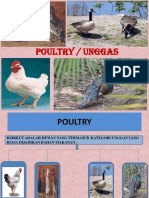 All Poultry
