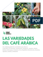 Las Variedades Del Cafe Arabica