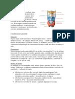 laringe Y TRAQUEA (1).docx