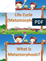 LIFE CYCLE.pptx