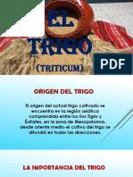 EL TRIGO.pptx