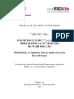 Percepciones Respecto a La Música Popular Urbana en Territorio Mapuche Williche