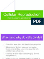 Ch11_CellDivision.ppt
