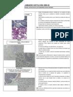laminariodehistologa2005-2006-dr-jessicafernandez-121207213931-phpapp02.pdf