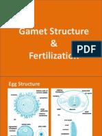 Devlopment plasm germinal
