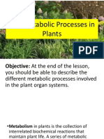 Lesson 8.3 The Metabolic Processes in Plants.pptx