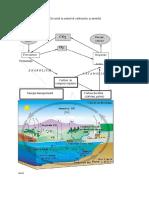 Circuitul În Natură Al Carbonului Și Azotului