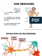 bases-de-una-coordinacion-nerviosa.pptx