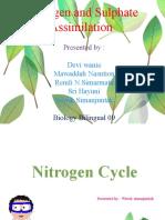 Nitrogen and Sulphate  Assimilation Presentation