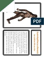 Infokarten Entwicklung Mensch