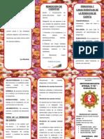 TRIPTICO DEL DUNI 2019.docx