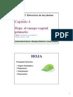 9. Hoja Fotosintesis Respiración
