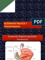 Utero y Ovarios US