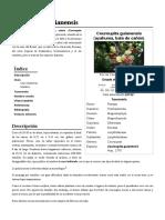 Couroupita_guianensis.pdf