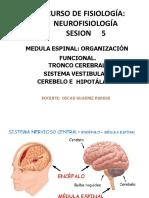 212760098-NEUROFISIOLOGIA-5 (1)
