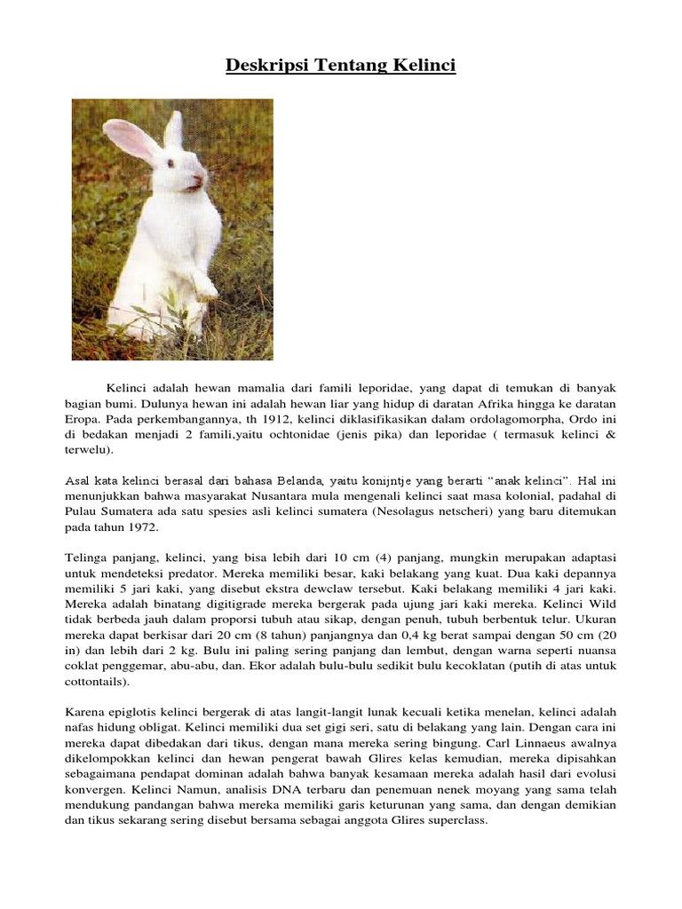 Deskripsi Tentang Kelinci