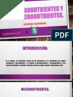 Macronutriente y Micronutriente