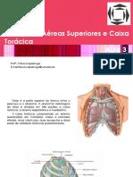 Tórax e Caixa Torácica - Aula 3.pdf