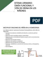 1fisiologina Renal 3