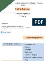 anatomia digestivo