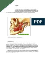 Músculo Pterigoideos Medial