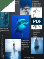 Infografia Tiburones