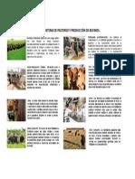 Infografia Sistemas de Pastoreo y Produccion de Bovinos