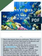 Bony Fishes