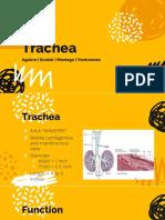 Ga 2 Trachea