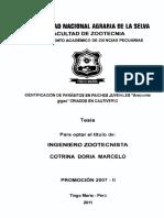 TZT-569.pdf