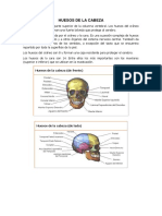 Clase 2 Anatomia