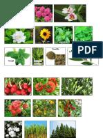 Plantas Ornamentales,Medicinales, Industriales, Alimentiias