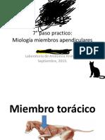 Clase 7 Anatomia Del Canino 1pppppp