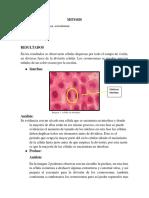 INFORME MITOSIS (1).docx