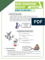 El Reino Plantae Características Para Segundo de Secundaria