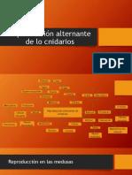 Reproducción_alternante[1].pptx