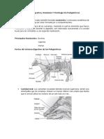 Sistema Digestivo Poligastrico y Monogastrico