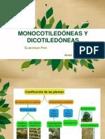 MONOCOTIDELONEAS