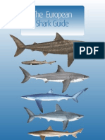 The European Shark Guide