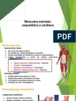 Musculos Estriados