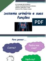 1.1 - Sistema Urinário e Suas Funções