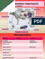 hemoparasitos1-140325091221-phpapp02