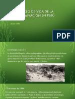Ciclo de Vida de La Ilum. Perú 1884- 1962-JL-REWRITE