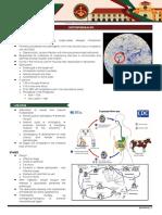 6 - Opportunistic Protozoans