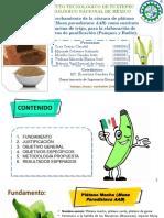 Elaboración de Harina de Cascara de Platano Macho Para Procesos de Panificación II