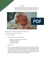 Lóbulo frontal.docx