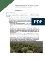 Buenas practicas agrícolas en el cultivo de aguacate
