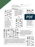 DNA Tech Good Review Sheet