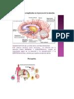 Estructuras implicadas en los procesos de atención