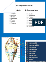 Osteologia Da Cabeça e Articulaçoes Vet